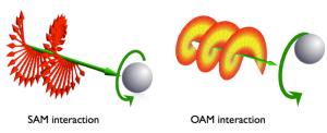800px-Sam-oam-interaction