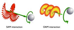 800px-Sam-oam-interaction