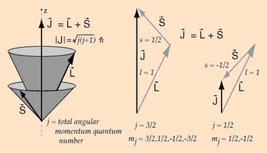 vector-model-2